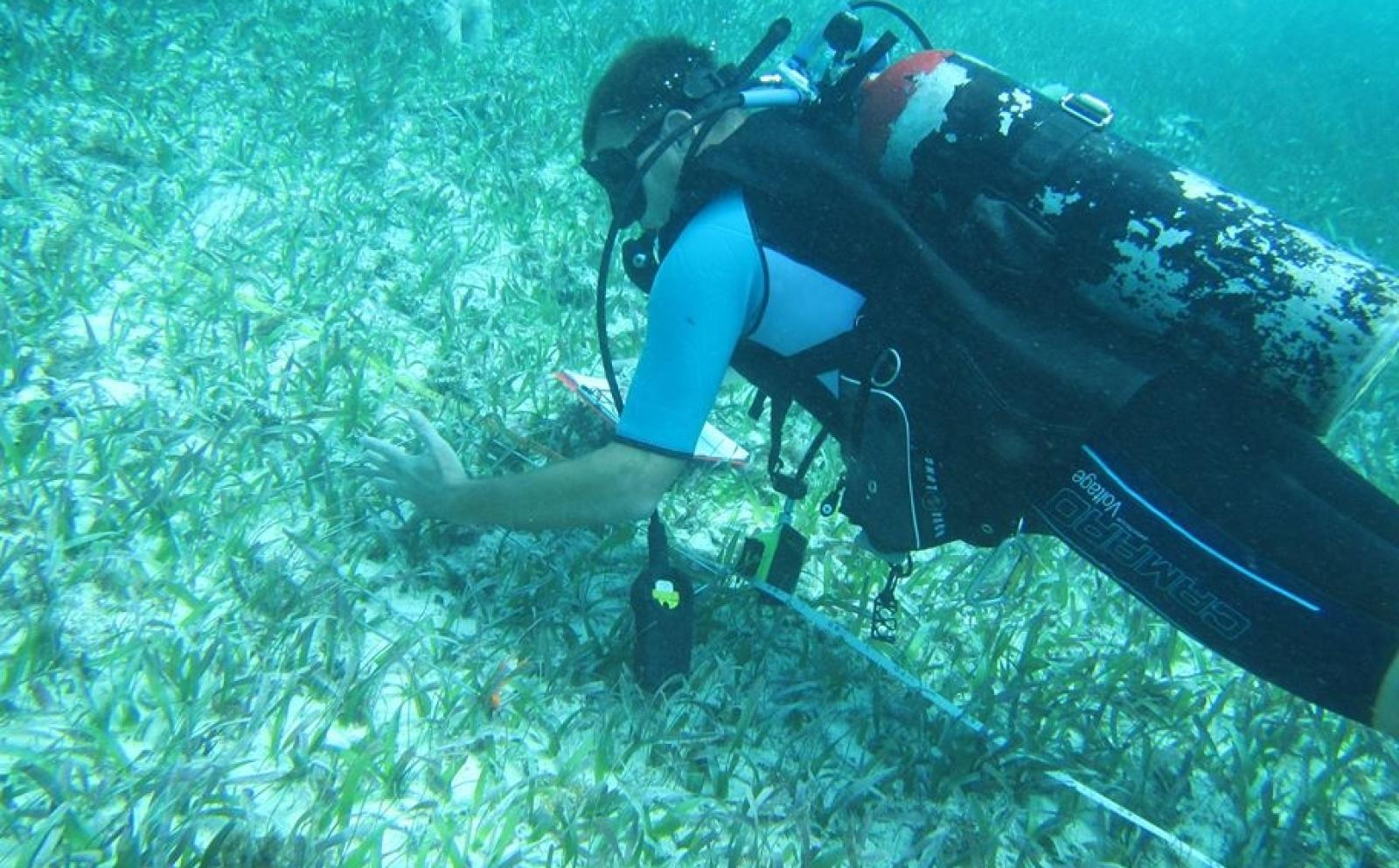 ベリーズの海でダイビング調査中の高校生ボランティア